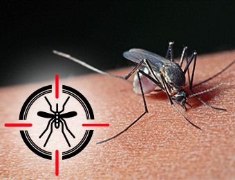 Mosquito up close biting with mosquito icon in cross hairs
