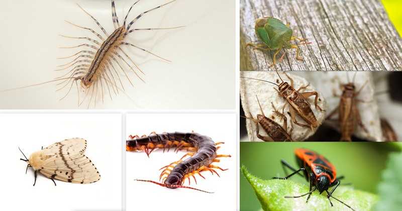Common Pests Header